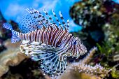 pic of algae  - The underwater world - JPG