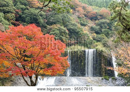 Autumn tree amd waterfall