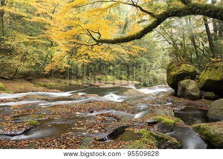 Autumn gentle river