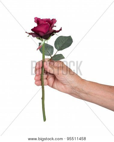 Old Hand Giving A Rose
