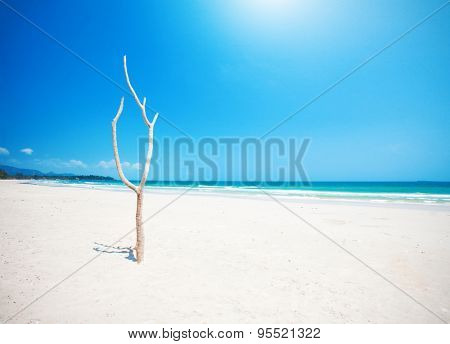 Dead tree on beautiful beach