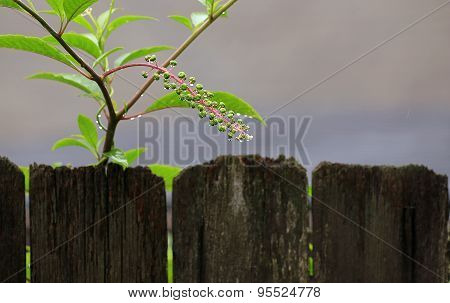Raindrops On Flowering Plant