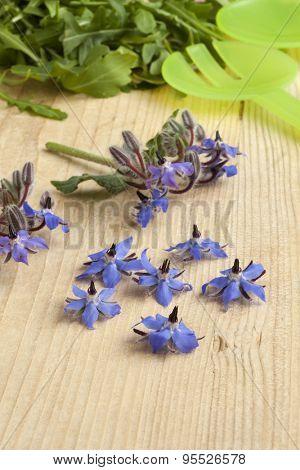 Fresh blue borage flowers to decorate the salad