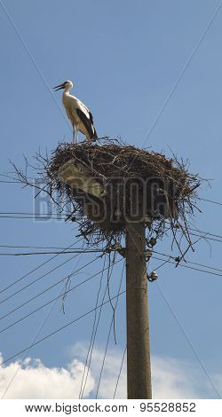 Stork in the nest closeup