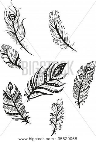 decorative picture feathers of birds in cartoon style