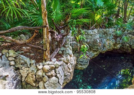 Jungle Cenote