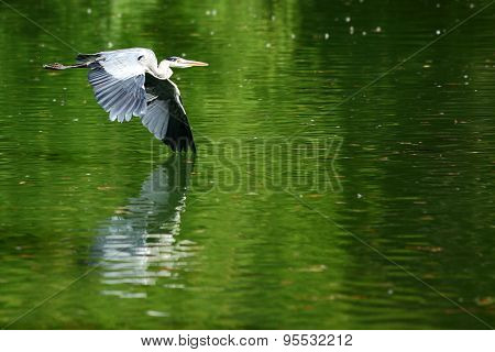 A heron over a lake
