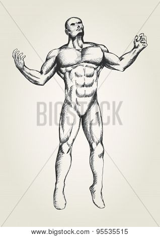 Muscular Man With Open Arms