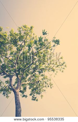 Summer landscape with sky and tree ( Filtered image processed vintage effect. )