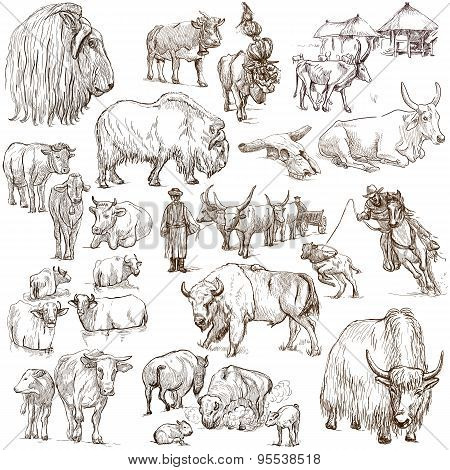 Cows And Cattle - Pack Of Animals. Hand Drawings.