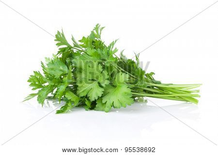 Fresh garden herbs. Parsley. Isolated on white background
