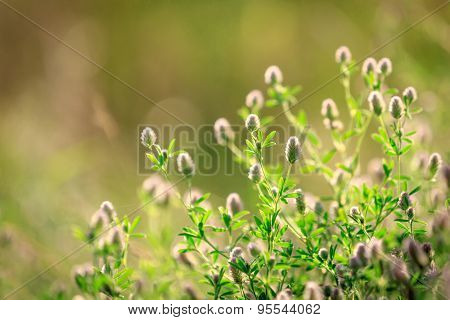 Wild flowers on meadow at summer time