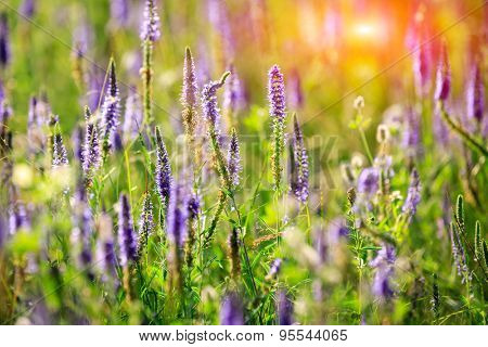 Nice summer blue flower meadow - soft photo