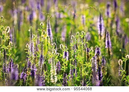 nice summer wild flowers on meadow