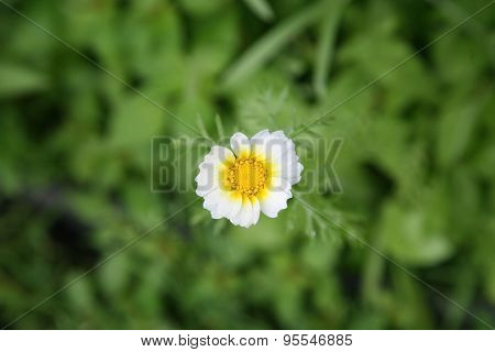 White Whimsical Wildflower