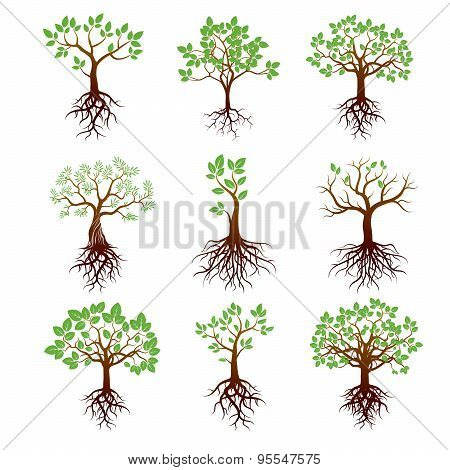 Set of Trees, Green Leafs And Roots