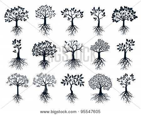 Set Of Black Trees And Roots