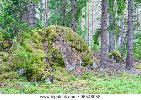 Giant Moss Covered Boulder In The Forest