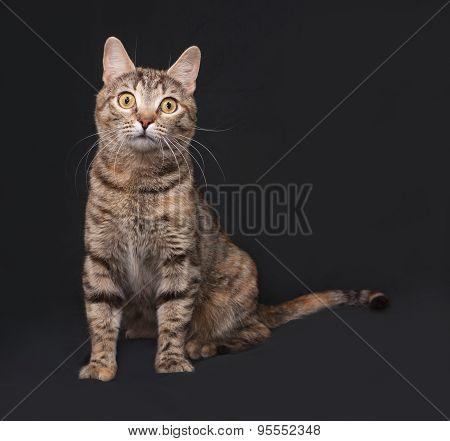 Tricolor Striped Cat Sitting On Dark Gray