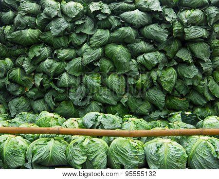 cabbage arranged on truck for transportation at Phu Thap Boek in PHETCHABUN THAILAND
