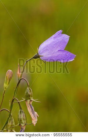 Purple Wild Flower Macro