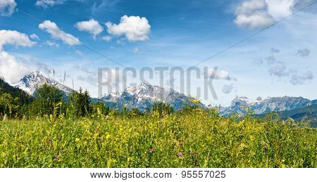 Low angle close up of wild grassy meadow with flowers, snow-capped mountain peaks in backdrop beneath blue sky and white clouds