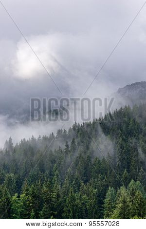 Aerial view of green fir trees partially obscured by mist and cloud