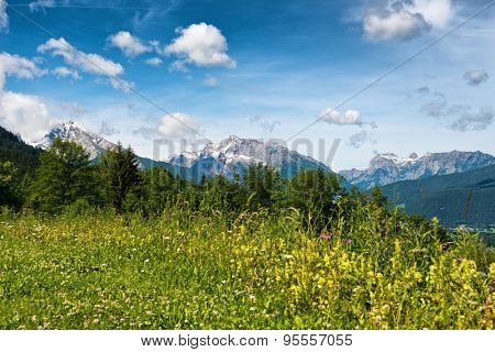 Close up of overgrown wild meadow with trees and snow-capped mountains in backdrop beneath blue sky and white clouds