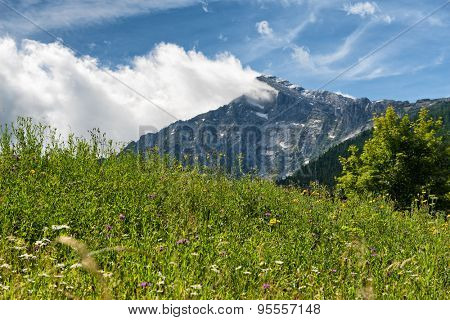 Close up of overgrown grassy meadow with rocky mountain vista backdrop beneath blue sky and white cloud