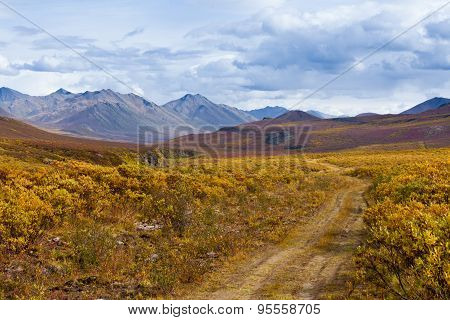Fall Color Tombstone Territorial Park Yukon Canada