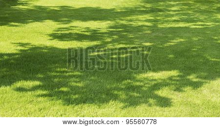 Tree Shadow On Green Grass