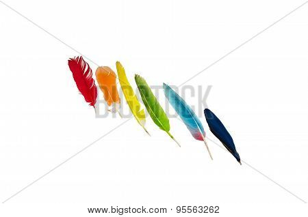 Colored Feathers On White Background