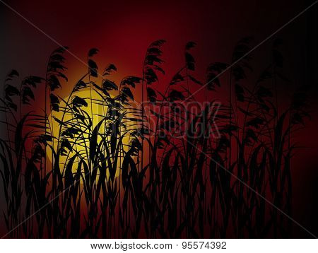 illustration with rush silhouettes at dark red sunset