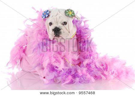 Cachorro malcriado