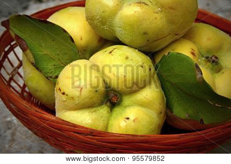 Quinces in the basket