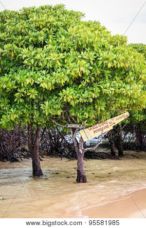 Mangrove tour sign in tree