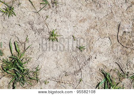 Grey Clay In Drought