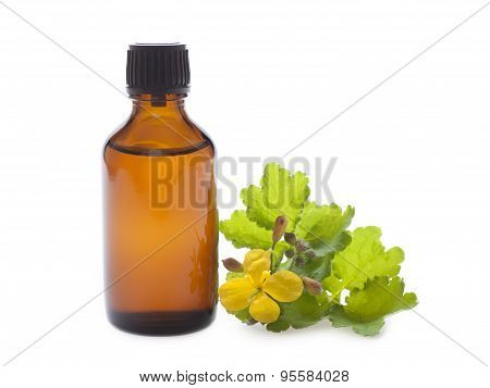 Oil Celandine Herbs In A Dark Bottle On A White Background