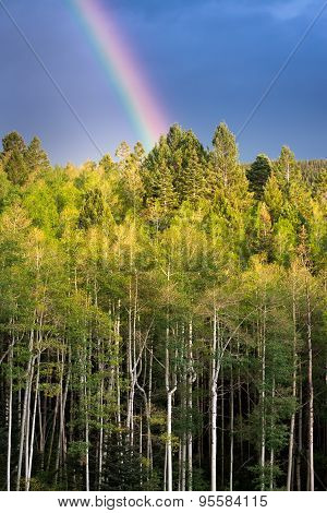 Rainbow Over Golden Aspens