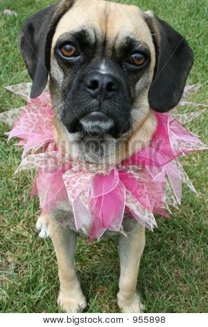 Doggy All Dressed Up