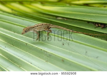Gecko On A Leaf.