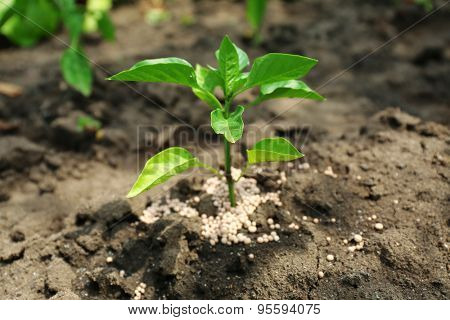 Plant with fertilizer over soil background