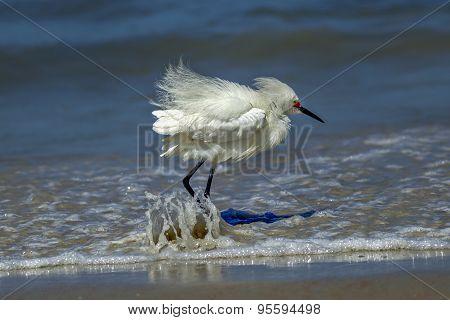 Water Splashes On Egrets Legs.