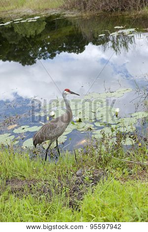 Crane by the waters edge.