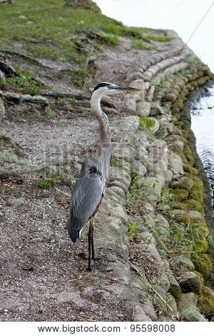 Heron By The Water's Edge.