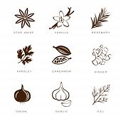 pic of condiment  - Colorful web icon set spices - JPG