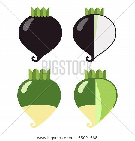 Root vegetables: radish black and green a general view and in section on a white background