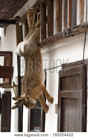 a couple of shooting hares hanging on an old ladder in winter