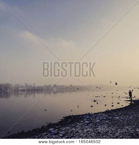 lonely person feeding ducks by the Danube