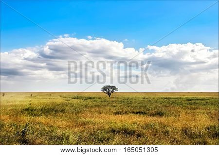 Lonely tree in the African savannah. Tanzania. National park Serengeti.